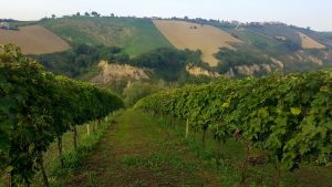 Vingneto Cantine Frontenac in Abruzzo